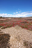 Gebarsten aarde in droogte, Tasmanige stock foto
