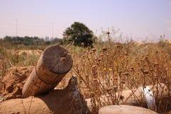 Gebarsten boomboomstammen in de woestijn op een de zomerdag royalty-vrije stock afbeelding