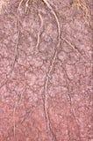 Gebarsten de gronddroogte van boomwortels achtergrond Royalty-vrije Stock Afbeeldingen