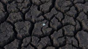 Gebarsten, dorre die grond door droogte, met één het kleine installatie groeien wordt beschadigd stock afbeeldingen