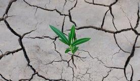 Gebarsten droge aarde en een groene eenzame installatie die onderbrekingen door de barst stock afbeeldingen