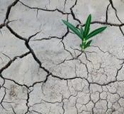 Gebarsten droge aarde en een groene installatie Ecologische en klimaatproblemen royalty-vrije stock foto's