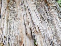 Gebarsten houten raad, Houten muurachtergrond of textuur Royalty-vrije Stock Afbeelding