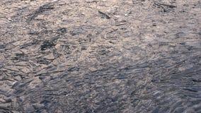 Gebarsten ijs op de rivier stock videobeelden