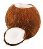 kokosnoot Stock Foto