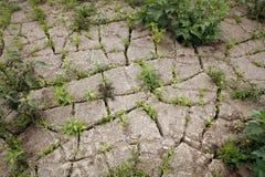 Gebarsten modder Stock Foto's