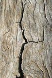 Gebarsten oud hout royalty-vrije stock foto's