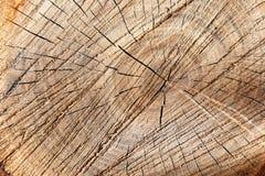Gebarsten plak van jonge eiken boom stock afbeeldingen