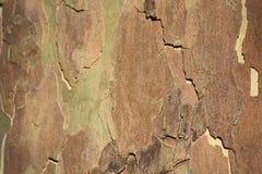 Gebarsten schors Houten Textuur De abstracte achtergrond van de herfst Zachte nadruk royalty-vrije stock afbeelding