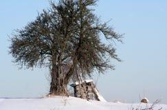 Gebeëindigd brandhout voor de winter Royalty-vrije Stock Foto's