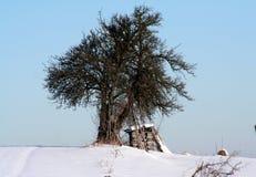 Gebeëindigd brandhout voor de winter Stock Foto's