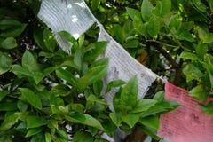 Gebedvlaggen in tuin Stock Foto's