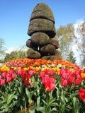 Gebeeldhouwde Shrubbery in Front Of Tulips Royalty-vrije Stock Foto's