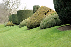 Gebeeldhouwde Struiken in Tuin Stock Foto
