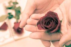 Geben einer Rose im Valentinstag Stockfoto