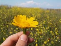 Geben Sie Blumen Lizenzfreies Stockbild