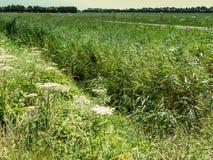 Geben Sie im Polder, die Landschaft von Holland mit einem Graben um Lizenzfreie Stockfotos