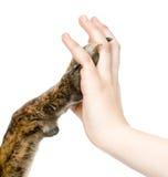 Geben Sie mir fünf - verfolgen Sie das Drücken seiner Tatze gegen eine Frauenhand Getrennt Lizenzfreie Stockbilder