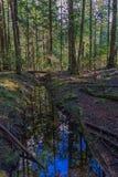 Geben Sie mit Wasser im nassen Wald in Kanada mit toten Bäumen herum mit einem Graben um Lizenzfreies Stockbild