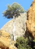 Geben Sie nie auf! Leben gegen die Chancen auf den Felsen lizenzfreies stockfoto
