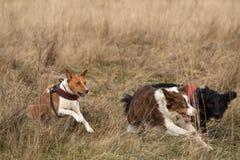 Geben Sie von der Begrenzung, drei Hunderennen frei Stockbilder