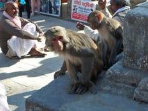 Geben Sie wie ein obdachloser Affe frei Stockfotos