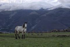 Geben Sie wildes Pferd am Fuß der Berge Stara Planina in Bulgarien frei Stockfotografie