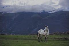 Geben Sie wildes Pferd am Fuß der Berge Stara Planina in Bulgarien frei Stockfoto