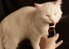 Geben von Katzenmedizin stockfotografie