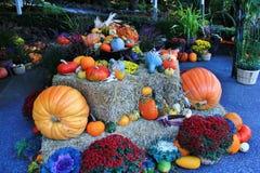 Gebender Dank, Herbst, Blume in Butchart-Garten, Victoria, Vancouver Island, Briten Kolumbien, Kanada Lizenzfreies Stockfoto