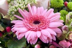 Gebera Blumenstrauß Lizenzfreie Stockfotos