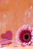 Gebera Daisy and hearts Stock Photo