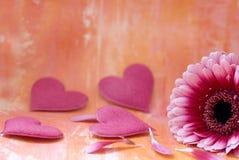 Gebera Daisy and hearts Stock Images