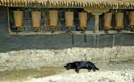 Gebet dreht innen Tibet mit Hund Stockbild