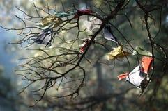 Gebete abgefangen in einem Baum Stockbilder