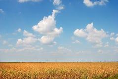 Gebied 03 van het graan stock foto