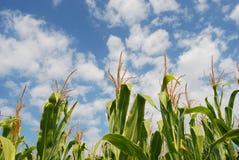Gebied 08 van het graan stock afbeelding