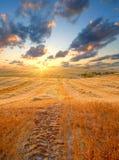 Gebied bij zonsondergang Royalty-vrije Stock Afbeelding