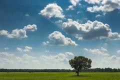 Gebied, boom en blauwe hemel royalty-vrije stock afbeeldingen