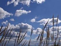 Gebied dat van bruin gras in de wind slingert Royalty-vrije Stock Foto