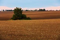 Gebied in de herfst Stock Foto