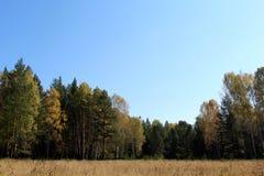 Gebied in de herfst Stock Foto's