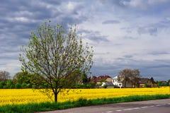 Gebied in de lente Royalty-vrije Stock Afbeeldingen