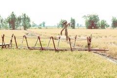 Gebied en bamboebrug walkwayt, landelijk platteland Vogelverschrikkertribune op gebied bamboe houten terras De achtergrond van de stock fotografie