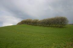 Gebied en bomen Royalty-vrije Stock Afbeeldingen