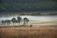 Gebied en bos in de mist/de ochtend/de aard van het Verre Oosten van Rusland Stock Afbeeldingen