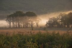 Gebied en bos in de mist/de ochtend/de aard van het Verre Oosten van Rusland Royalty-vrije Stock Afbeeldingen
