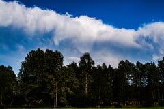 Gebied en bos met bewolkt weer op de achtergrond Royalty-vrije Stock Afbeelding