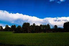 Gebied en bos met bewolkt weer op de achtergrond Royalty-vrije Stock Foto's