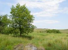 Gebied en eenzame boom Royalty-vrije Stock Foto